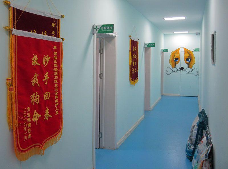 乐虎国际电子游戏市宠物医院-3.jpg