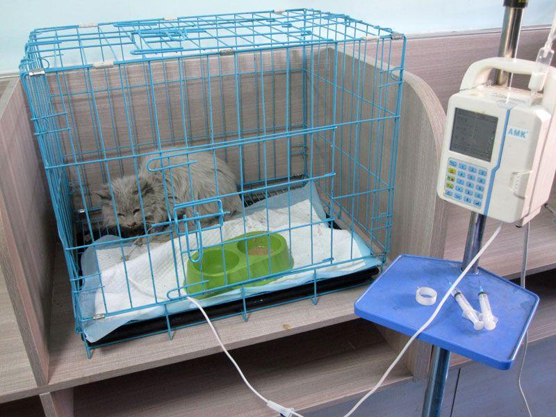 乐虎国际电子游戏市宠物医院-10-诊疗室中正在治疗的猫咪.jpg