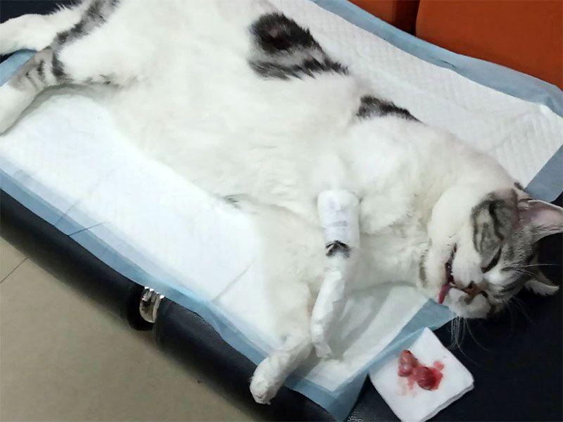 乐虎国际电子游戏市宠物医院-做完绝育手术的猫.jpg