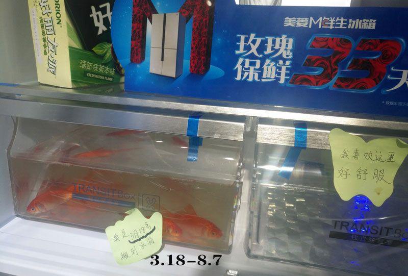 可养鱼的美菱冰箱.jpg